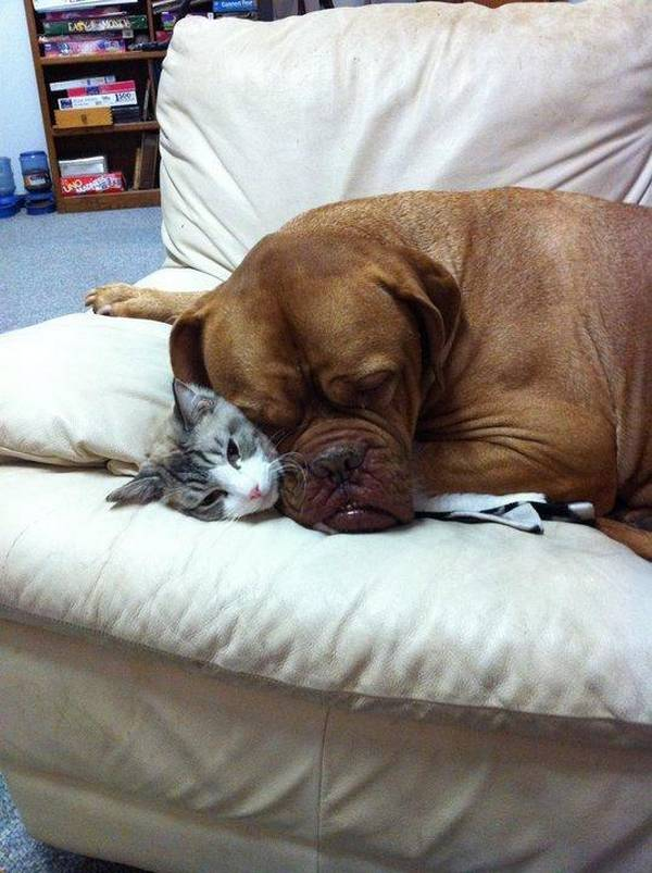 https://www.thedodo.com/dogs-who-are-smothering-the-cat-with-their-love-1047641763.html