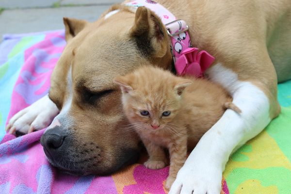 chienne-chatons-orphelins (14)