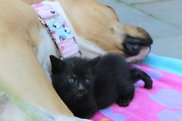 chienne-chatons-orphelins (3)