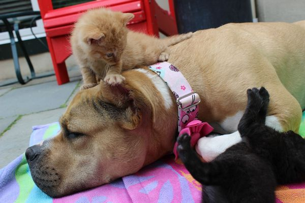 chienne-chatons-orphelins (8)