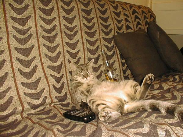 chiens-chats-installes-canape (16)