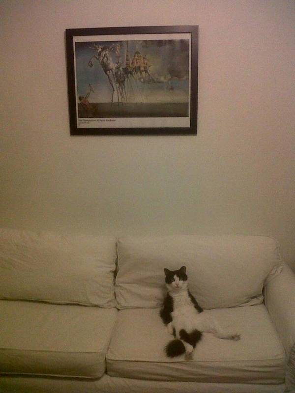 chiens-chats-installes-canape (5)