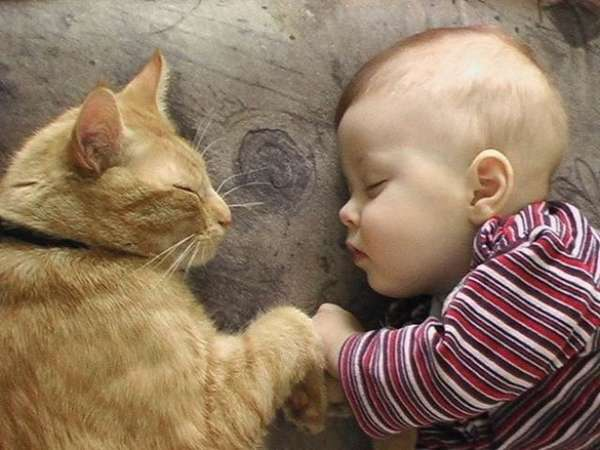 http://izismile.com/2012/08/22/babies_and_cats_being_too_cute_25_pics.html