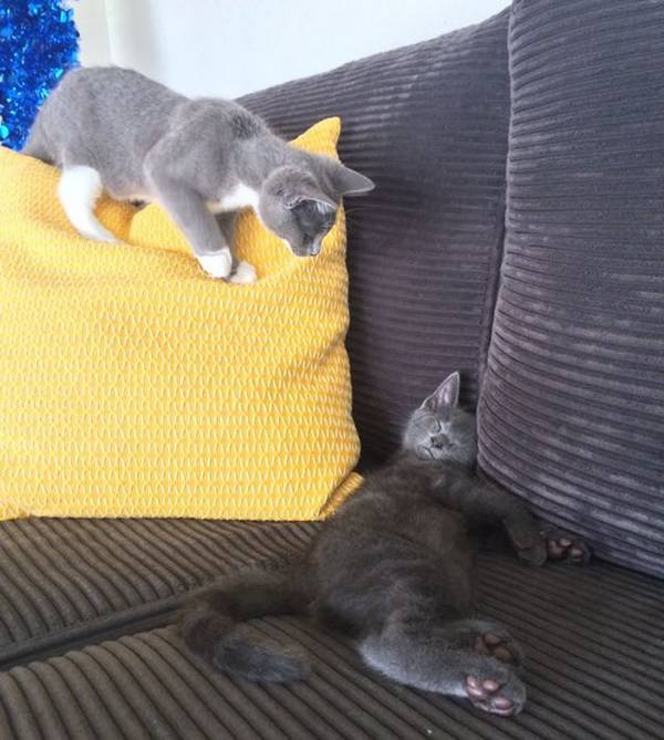 2-chatons-sauve-vie (1)