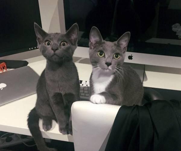 2-chatons-sauve-vie (2)