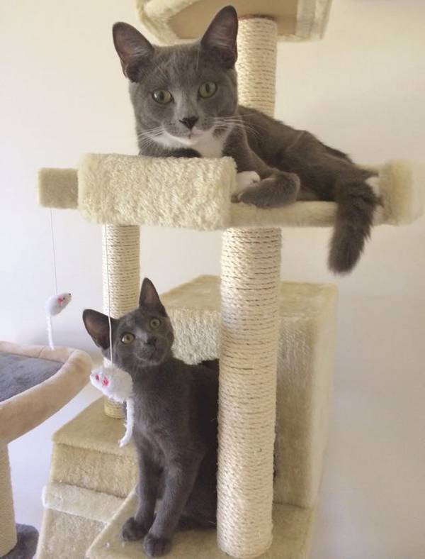 2-chatons-sauve-vie (3)