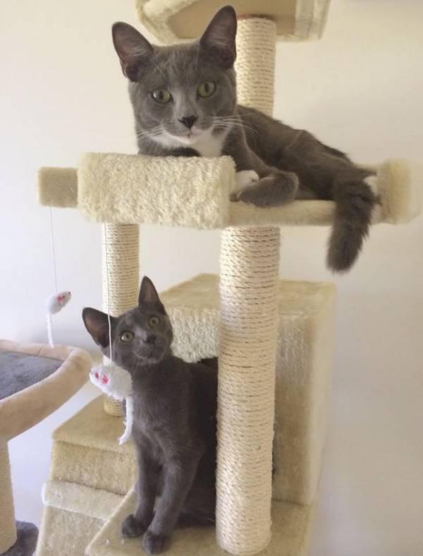 Une femme a recueilli ces deux chatons et ils lui ont - Retour de couche quand reprendre la pilule ...
