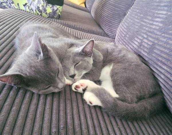 2-chatons-sauve-vie (4)