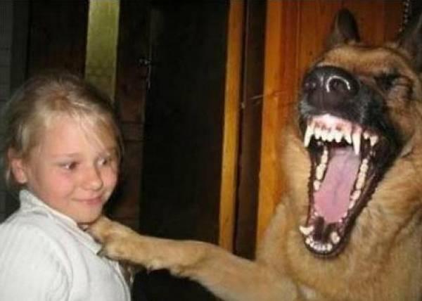 animaux-mort-de-rire (21)