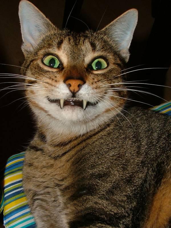 http://slonik-chan.deviantart.com/art/vampire-cat-105582259