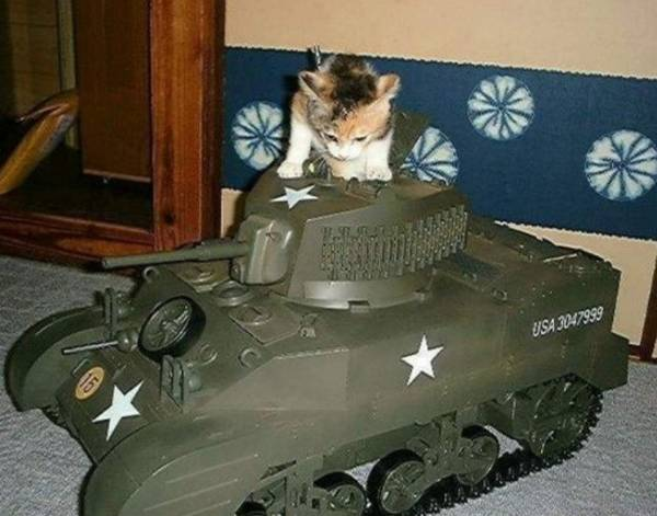armee-chat-guerre (18)