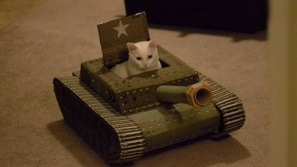 armee-chat-guerre (5)