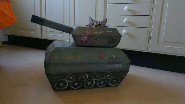 armee-chat-guerre (6)