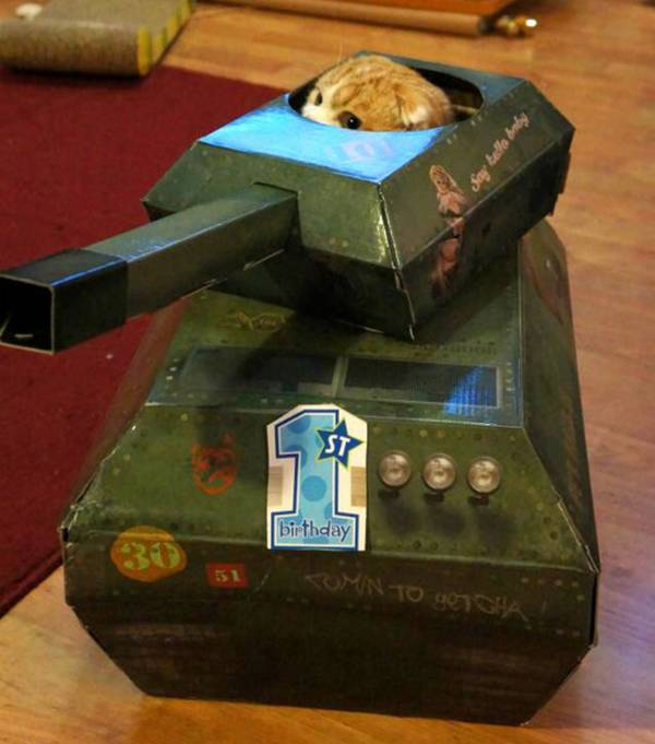 http://thefluffingtonpost.com/post/24707492215/cat-tank