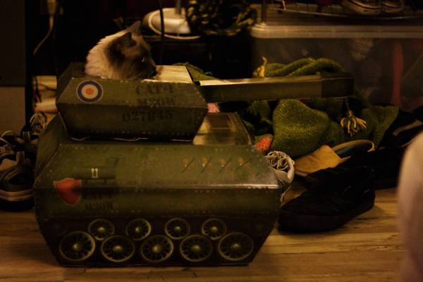 armee-chat-guerre (8)