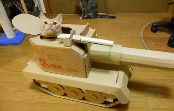 armee-chat-guerre (9)