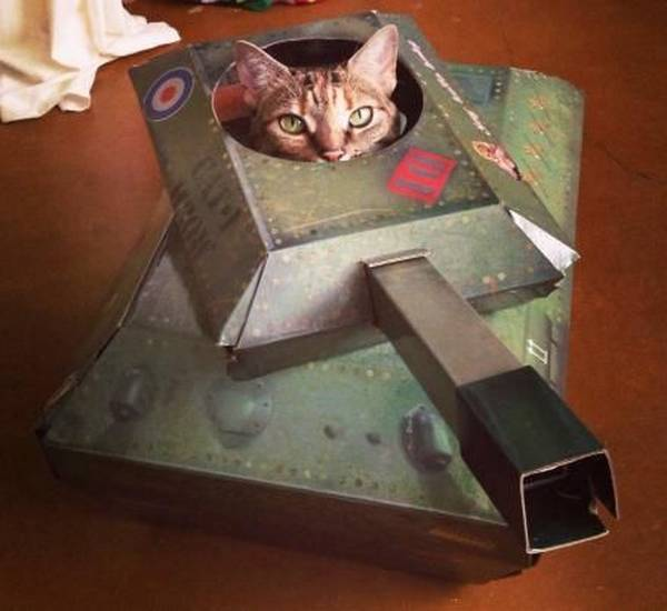 armee-chat-guerre