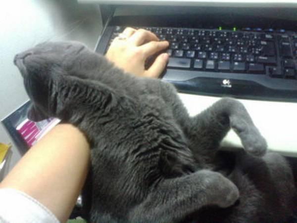 http://livedoor.blogimg.jp/mojohujo/imgs/e/a/eaa3e888.jpg