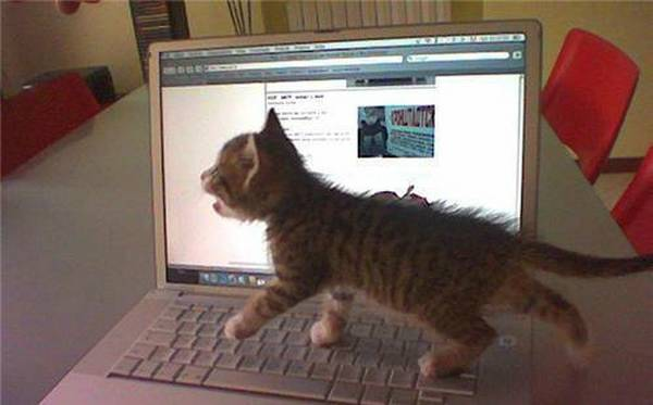 chat-arrete-internet (15)
