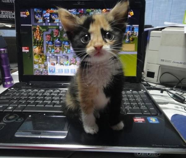 http://www.doodoo.ru/uploads/posts/2012-04/animals-photos-25.jpg