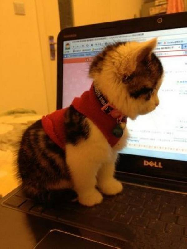 http://sharecute.com/picture-260-kitten-and-notebook.html