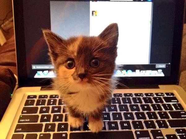 chat-arrete-internet (8)