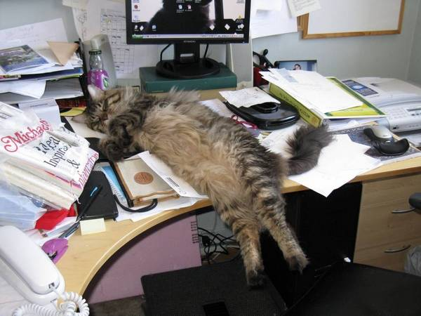 http://swick.co.uk/index.php/2014/02/10-awesome-sleeping-cat-photos/