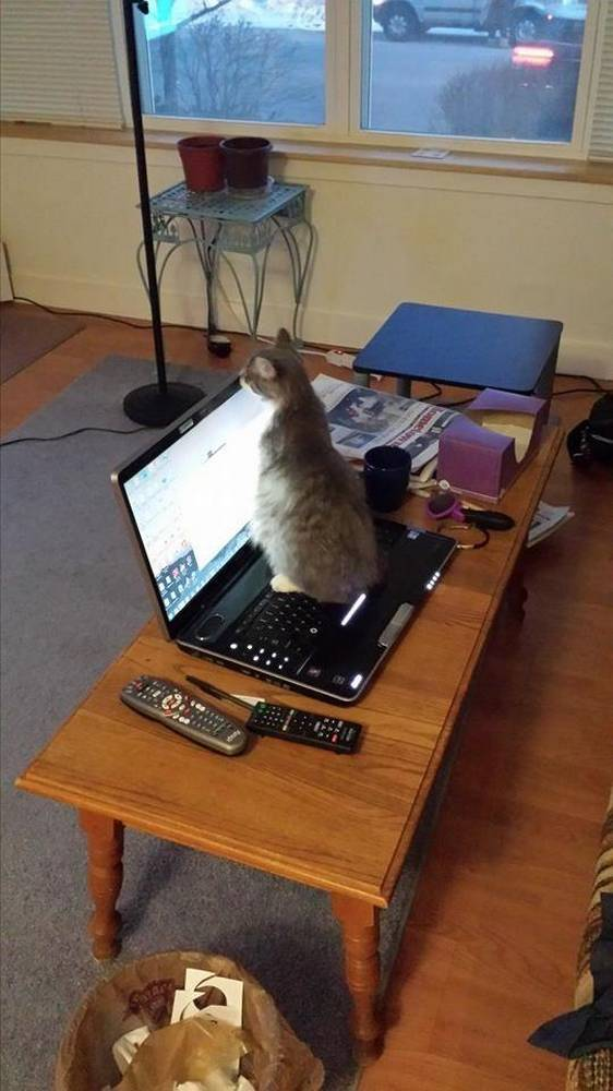 chat-collegue-bureau (13)