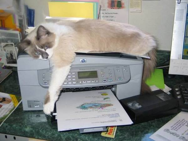 http://www.catpicturesite.com/funny-cat-pictures/printing-sure-makes-me-tired