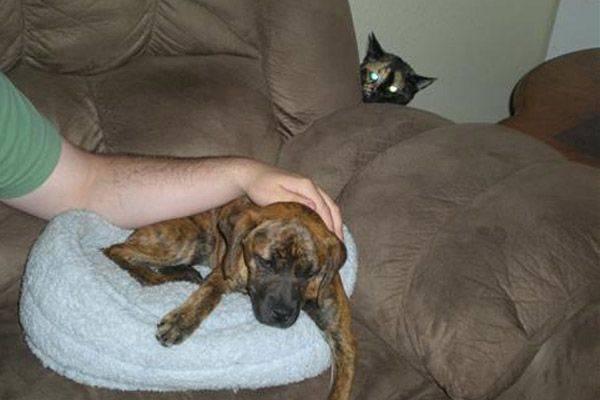 http://amazing-creature.blogspot.fr/2011/10/23-epic-animal-photobombs.html#.Vd8ZIlI_-Wg