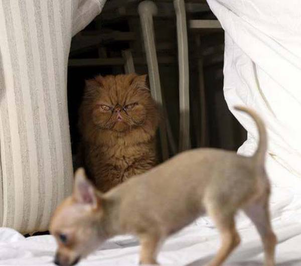 chat-conspiration-chien (15)