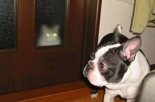 chat-conspiration-chien (17)