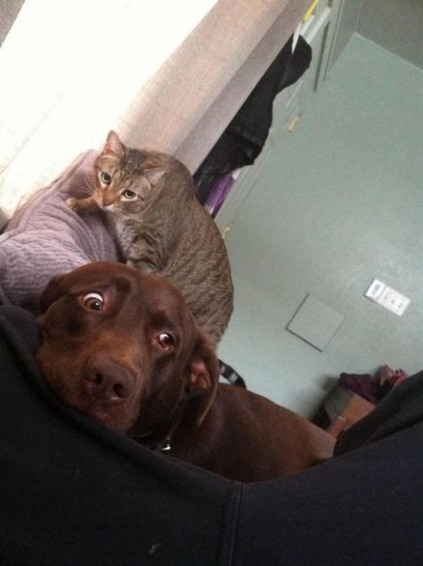 http://acidcow.com/pics/56968-dogs-and-cats-50-pics.html