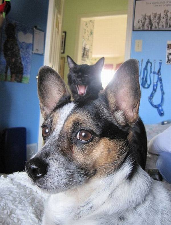 http://weruletheinternet.com/2011/12/05/20-pictures-of-dogs-and-cats-photobombing-each-other/