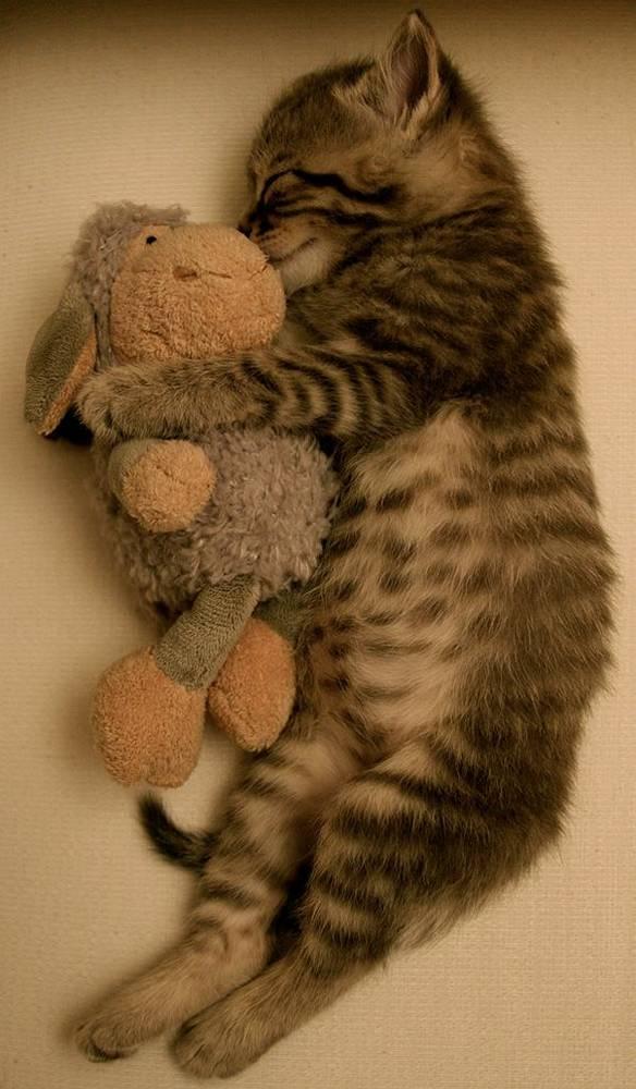 chat-dort-avec-peluche (2)