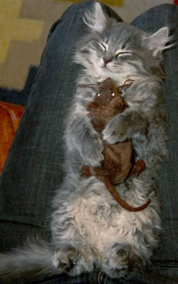 """Résultat de recherche d'images pour """"dormir comme un chat"""""""