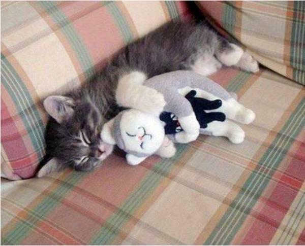 chat-dort-avec-peluche (5)