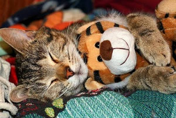 http://cdn.acidcow.com/pics/20130129/cats_snuggling_04.jpg