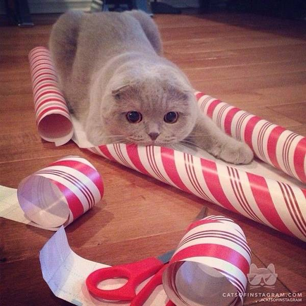 http://petslady.com/articles/petsladys-pick-cute-christmas-attack-cat-day-67783