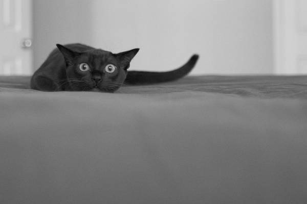 http://digital-art-gallery.com/oid/0/900x600_55_Cat_cat_humour_photo_photography_digital_art.jpg