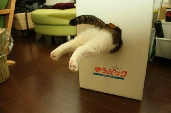 http://scientificgamer.com/schrodingers-cat-is-stuck-in-his-box/