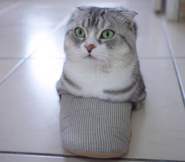 http://en.fishki.net/animals/1217395.html