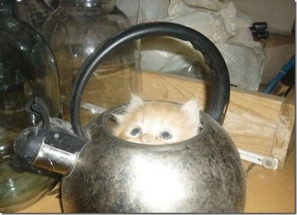 http://www.thechobble.com/2012/08/cats-rest-in-strangest-of-places-24.html