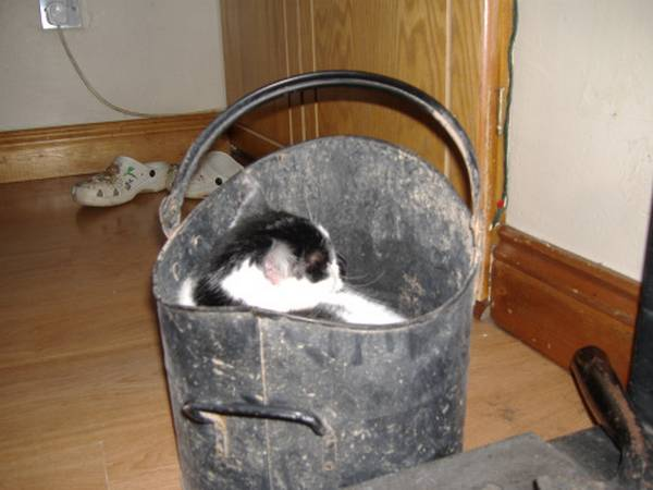 http://catssleepinweirdplaces.tumblr.com/