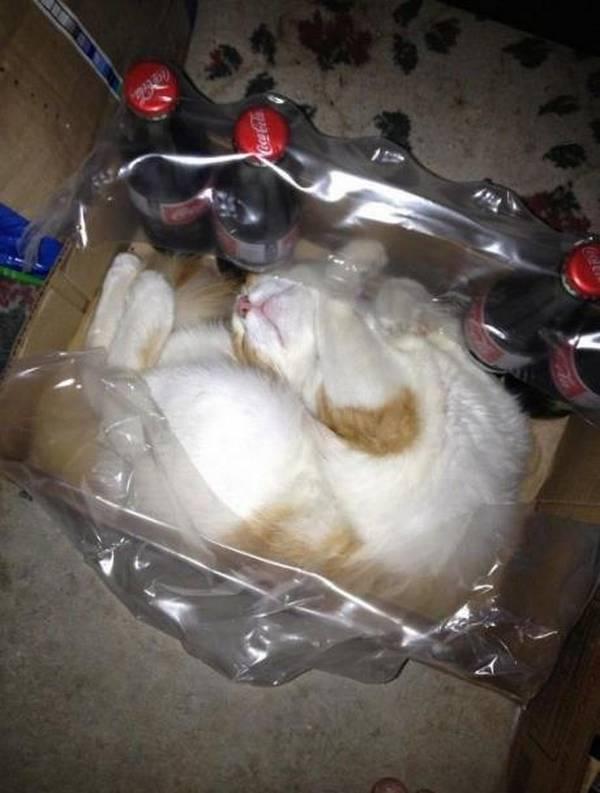 http://www.jokeroo.com/pictures/cats/1077091.html