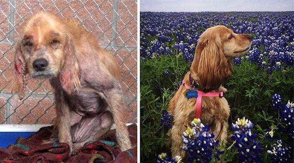chien-adoption-avant-apres (10)