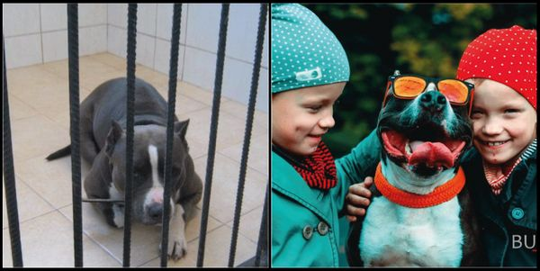 chien-adoption-avant-apres (23)