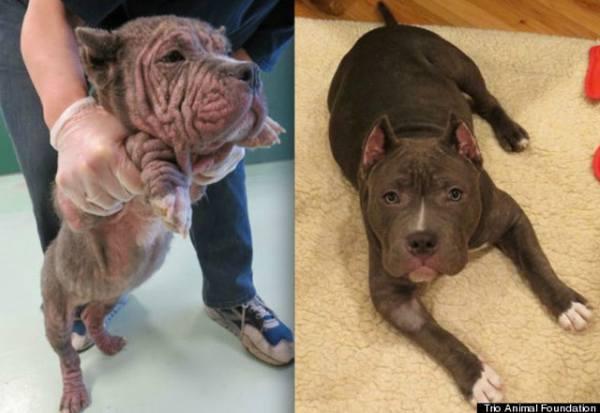 chien-adoption-avant-apres (24)
