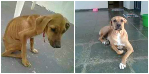 chien-adoption-avant-apres (25)
