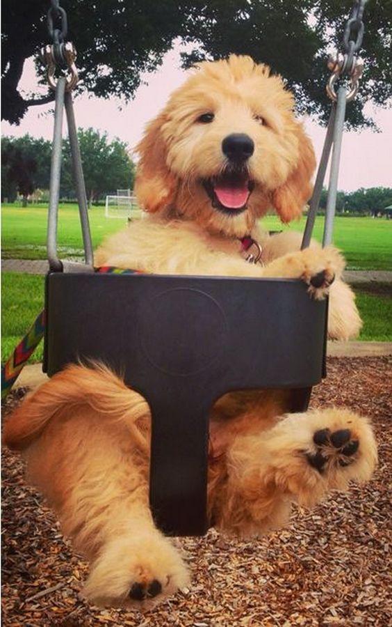 http://cuudulieutransang.wix.com/trangchu#!Cute-Puppy/c1p44/74A95037-921E-4F38-91B7-FFD00F50EE5D